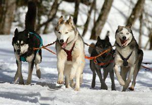Top 11 Disney dog movies for all doggo lovers